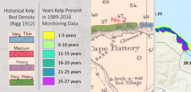 kelp storymap